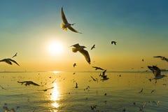 Μεταναστευτικά Seagulls πουλιά στοκ εικόνες