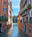 μεταναστευτικός ουρανός Βενετία κοπαδιών πουλιών στοκ φωτογραφία