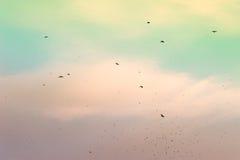 μεταναστευτικός ουρανός κοπαδιών πουλιών στοκ φωτογραφίες με δικαίωμα ελεύθερης χρήσης