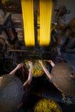 μεταξοσκώληκας Στοκ φωτογραφία με δικαίωμα ελεύθερης χρήσης