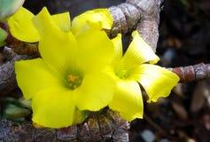 Μεταξωτός κίτρινος Floral Στοκ φωτογραφία με δικαίωμα ελεύθερης χρήσης