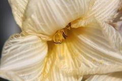 Μεταξωτό άσπρο λουλούδι κρίνων Στοκ φωτογραφία με δικαίωμα ελεύθερης χρήσης