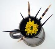 μεταξύ των αγκαθιών λουλ& Στοκ Εικόνα