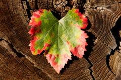Μετασχηματισμός χρώματος ενός φύλλου, πράσινος στο κόκκινο στοκ φωτογραφία με δικαίωμα ελεύθερης χρήσης