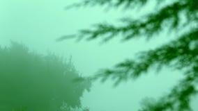Μετατόπιση εστίασης του φύλλου δέντρων, καπνός ξημερωμάτων, υδρονέφωση απόθεμα βίντεο