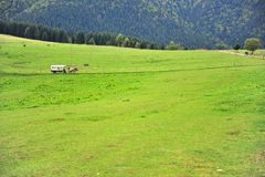 Μεταφορά αλόγων στην πράσινη κοιλάδα, Σλοβακία στοκ φωτογραφίες