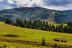 Μεταφορά αλόγων στο δρόμο βουνών στο πόδι mou Hymba Στοκ φωτογραφίες με δικαίωμα ελεύθερης χρήσης