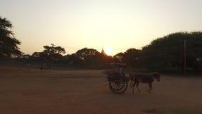 μεταφορά αλόγων σε Bagan απόθεμα βίντεο