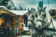Μεταφορά αλόγων Στοκ Εικόνες