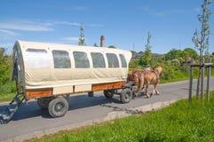 Μεταφορά αλόγων, Kap Arkona, νησί Ruegen, Γερμανία Στοκ εικόνες με δικαίωμα ελεύθερης χρήσης