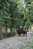 Μεταφορά Βιέννη αλόγων στοκ εικόνα με δικαίωμα ελεύθερης χρήσης