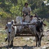 Βόδι και κάρρο - Inle - το Μιανμάρ Στοκ φωτογραφίες με δικαίωμα ελεύθερης χρήσης