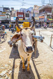Μεταφορά κάρρων βοδιών στην Ινδία Στοκ Εικόνα