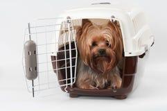 Μεταφορέας της Pet με το σκυλί στοκ φωτογραφία με δικαίωμα ελεύθερης χρήσης
