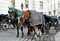 Μεταφορές αλόγων στη Βιέννη, Αυστρία, Ευρώπη στοκ φωτογραφία με δικαίωμα ελεύθερης χρήσης