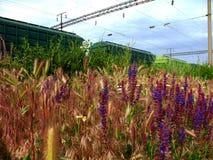 Μεταφορές σιδηροδρόμων με τα wildflowers στοκ φωτογραφία με δικαίωμα ελεύθερης χρήσης