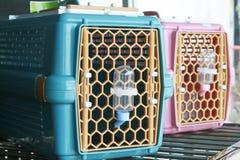 Μεταφορείς της Pet στο κατάστημα κατοικίδιων ζώων για την πώληση ή τη μεταφορά στοκ φωτογραφίες