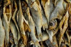 Μετρητής με τα παστά και αποξηραμένα ψάρια ως υπόβαθρο Στοκ Φωτογραφίες
