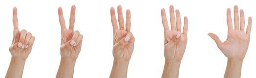 μετρώντας γυναίκα χεριών Στοκ Εικόνες