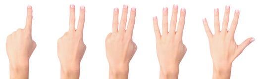 μετρώντας γυναίκα χεριών Στοκ φωτογραφία με δικαίωμα ελεύθερης χρήσης