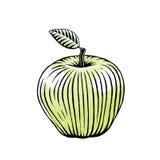 Μελάνι και σκίτσο Watercolor της πράσινης Apple Στοκ Φωτογραφία