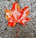 Με βγάλτε φύλλα μόνο στοκ εικόνα με δικαίωμα ελεύθερης χρήσης
