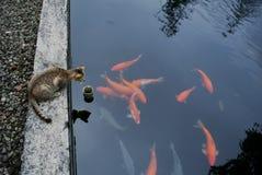 Με διδάξτε για να κολυμπήσετε Στοκ Φωτογραφίες