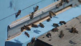 Μελισσοκομία, οι μέλισσες στην μπροστινή είσοδο κυψελών απόθεμα βίντεο
