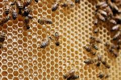 Μελισσοκομία στο Καζακστάν Στοκ εικόνες με δικαίωμα ελεύθερης χρήσης
