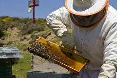 Μελισσοκομία Στοκ φωτογραφία με δικαίωμα ελεύθερης χρήσης