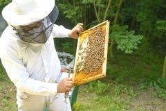 Μελισσοκόμος που ελέγχουν beeyard και μέλισσες υπαίθριες Στοκ φωτογραφία με δικαίωμα ελεύθερης χρήσης