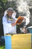 Μελισσοκόμος που κάνει την επιθεώρηση στο μελισσουργείο Στοκ εικόνες με δικαίωμα ελεύθερης χρήσης