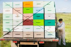 Μελισσοκόμος που υπερασπίζεται το σύνολο φορτηγών της κηρήθρας Στοκ εικόνες με δικαίωμα ελεύθερης χρήσης