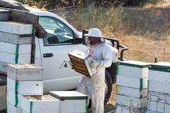 Μελισσοκόμος σκληρός στην εργασία Στοκ εικόνα με δικαίωμα ελεύθερης χρήσης