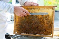 Μελισσοκόμος στην εργασία Στοκ Εικόνα
