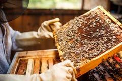 Μελισσοκόμος Στοκ Φωτογραφίες