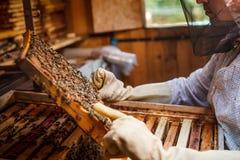 Μελισσοκόμος Στοκ εικόνα με δικαίωμα ελεύθερης χρήσης