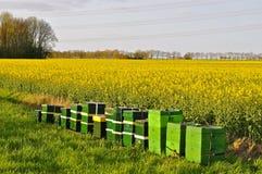 Μελισσουργεία δίπλα σε έναν τομέα του συναπόσπορου Στοκ φωτογραφίες με δικαίωμα ελεύθερης χρήσης