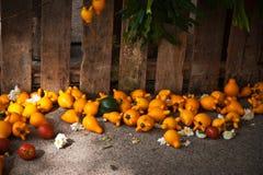Μελιτζάνα με την ντομάτα κίτρινη Στοκ Φωτογραφίες