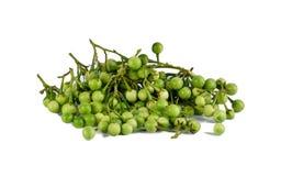 Μελιτζάνα μπιζελιών, Solanum torvum Στοκ Φωτογραφία