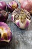 Μελιτζάνες και κρεμμύδι που αυξάνονται στην οργανική καλλιέργεια Στοκ Φωτογραφίες