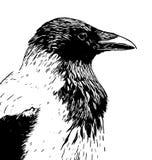 Με κουκούλα κεφάλι σχεδιαγράμματος κοράκων στο γραπτό σχέδιο γραμμών μελανιού διανυσματική απεικόνιση