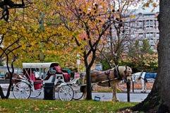 με λάθη άλογο Στοκ Εικόνα