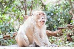 Με μακριά ουρά πίθηκος Ταϊλάνδη Macaque Στοκ Εικόνα
