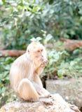 Με μακριά ουρά πίθηκος Ταϊλάνδη Macaque Στοκ φωτογραφία με δικαίωμα ελεύθερης χρήσης