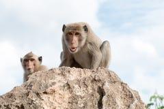 Με μακριά ουρά macaque, καβούρι-που τρώει macaque Στοκ εικόνες με δικαίωμα ελεύθερης χρήσης
