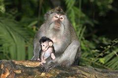 Με μακριά ουρά Macaque και μωρό στοκ εικόνες με δικαίωμα ελεύθερης χρήσης