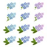Με ξεχάστε όχι λουλούδια καθορισμένα απεικόνιση αποθεμάτων
