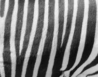 με ραβδώσεις λωρίδων Στοκ εικόνες με δικαίωμα ελεύθερης χρήσης
