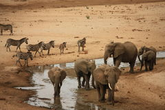 με ραβδώσεις της Τανζανί&alpha Στοκ Φωτογραφίες